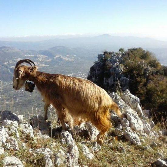 kelle-terre-esperia-pastore