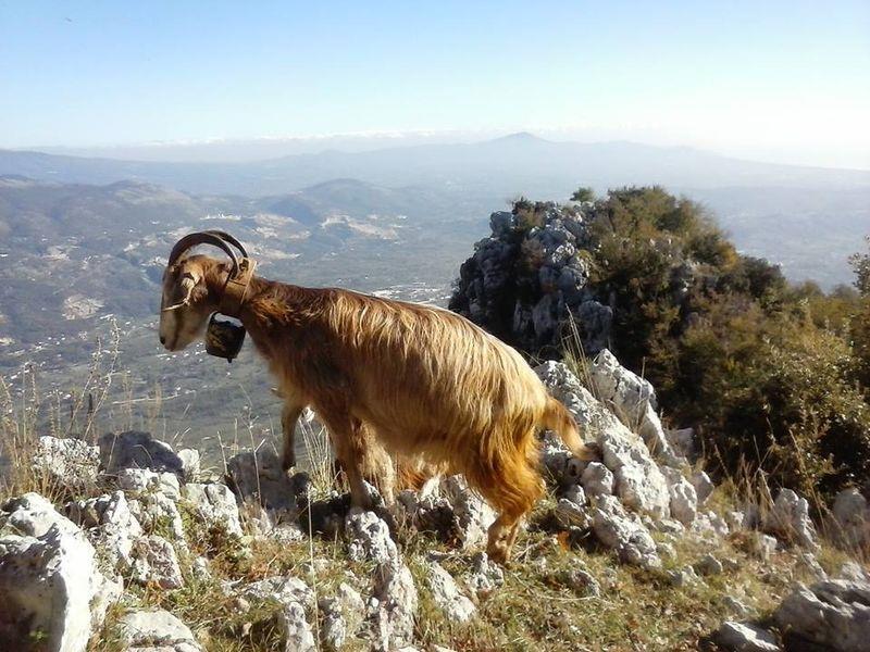 giornata col pastore