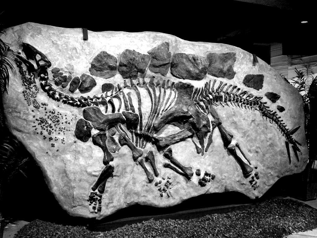 dinosauri-diluvio-stegosauro-blackwhite