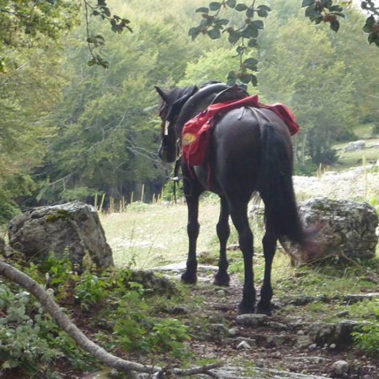 kelle-terre-horseback-cassino-cavendish-road-