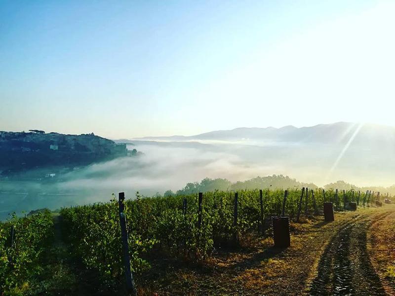 bio-winery tuscia